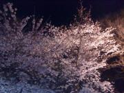 20090403083