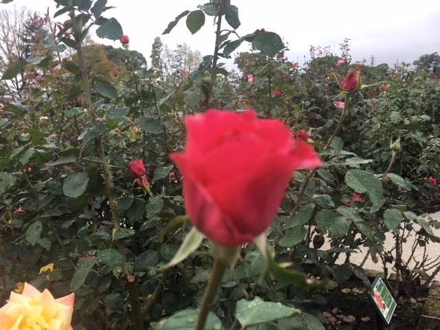 1/2017101808113432-IMG_3207-small.jpg
