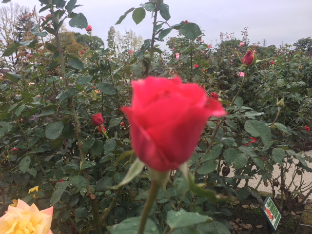 1/2017101808113433-IMG_3208-small.jpg